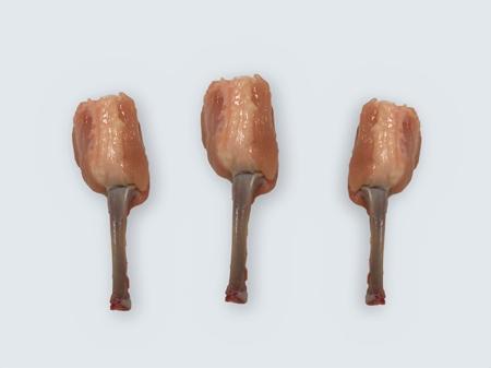 Tulip Select